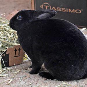 Natasha Rabbitova's yummy hay