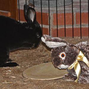 Natasha Rabbitova and Borders Bunny