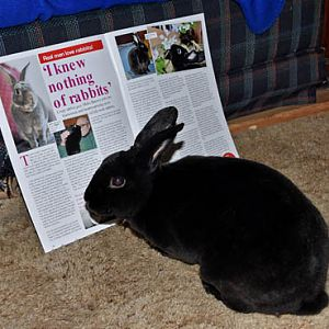 Natasha's in Bunny Mad Magazine - again!