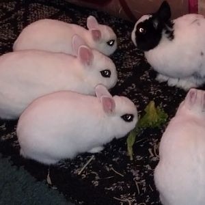 bonding little buns 03