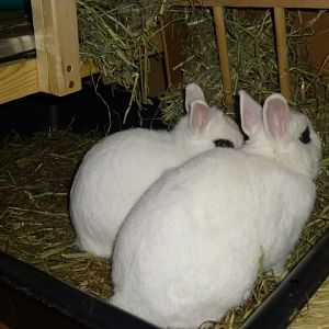 little bunnies litter box1