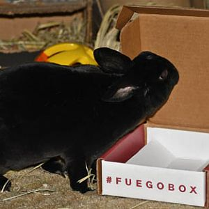 Natasha Rabbitova and the Fuego Box