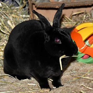 Natasha Rabbitova and the Yummy Hay