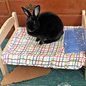 Natasha's new bed