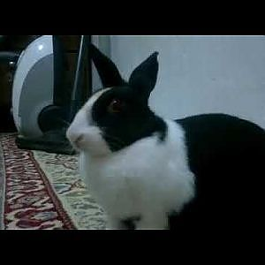 Petting A Bunny Rabbit - YouTube