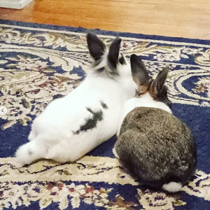 Missy and Bucky