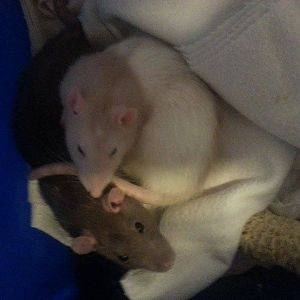 Brea (Brego) and Mandy