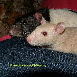 Sweetpea and Montegue