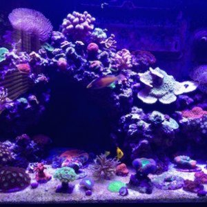 My Red Sea 250