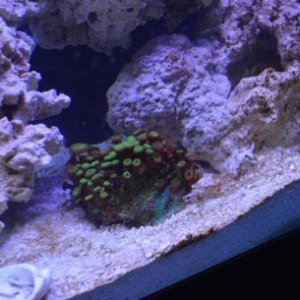 this is my tank so far and holding here for a few months