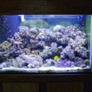 My 65 reef