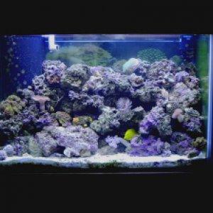 65 reef