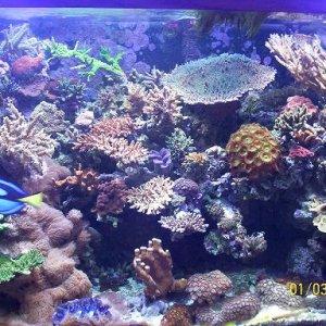 Montri 180 reef