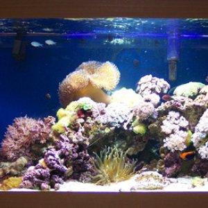 1a445 Lukes reef