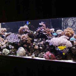 Ellery's Reef