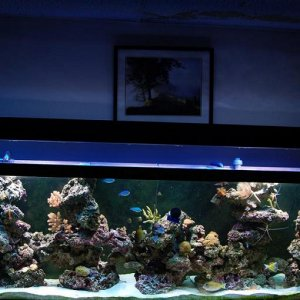 SHAVO's 125 reef in philly