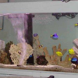 fishonlytank