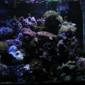 right side of my tank