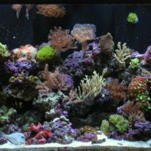 120 gallon reef