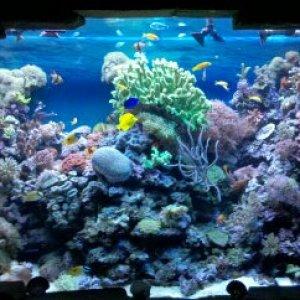 SeaCycled 1,000 gallon Reef
