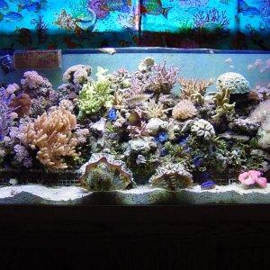 1997 90 Gallon Reef