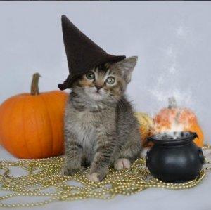Halloween_Witch_Costume.jpg