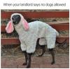 Sheep Dog.png