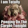 funny-dog-memes-33.jpg