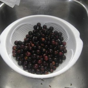 Muscadine is gonna be my 2nd batch...