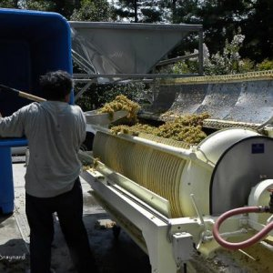 Traminette grapes in a bladder press. This photo was taken at the McRitchie Winery and Ciderworks.