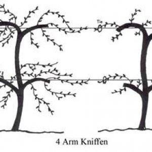 4 Arm Kniffen