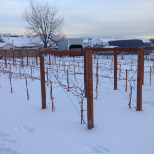 Vineyards first winter. 2013